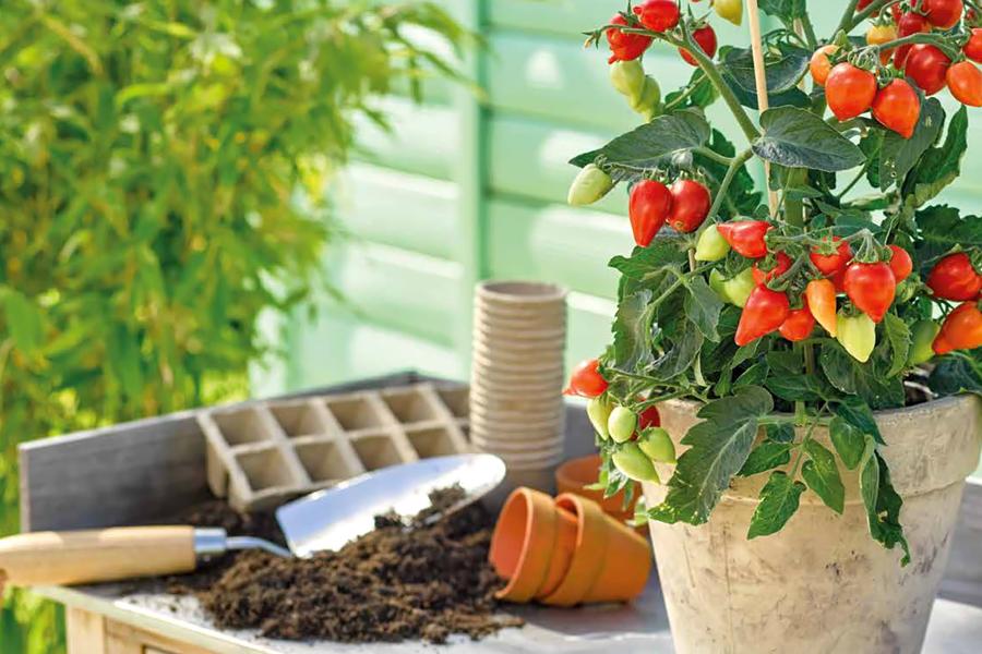 ornamental-ediblesherbs.jpg