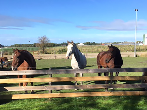 Horizon Paardencoaching