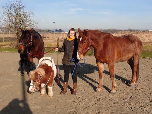 Foto Paardencoaching